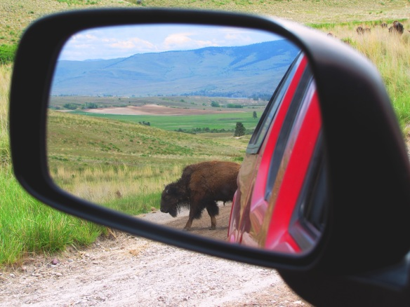 Montana Rear View Mirror